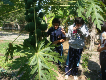 Photo of two young women examining papayas.