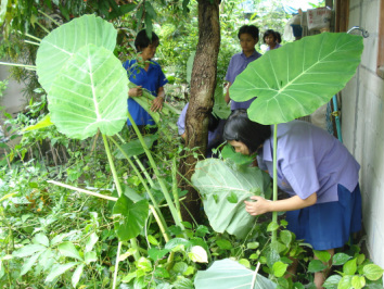 Photo of students picking vegetables.