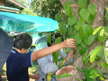 Photo of two students picking vegetables