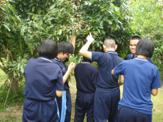 Photo of group examining fruit on a tree.