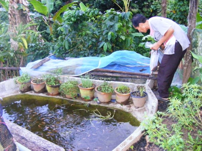 fish farming at home