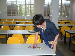 A student wipes the tables in the dining hall