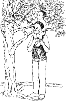 child on father's shoulders reaching for tree branch