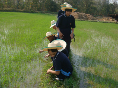 Working alongside other members of the community, they learn to cultivate rice.