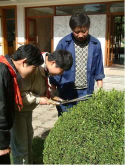 Photo of students trimming a bush in the garden